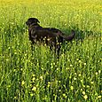 Angus in Oz, June 2014, Eastern Townships