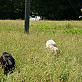 August 13, 2014, Eastern Townships