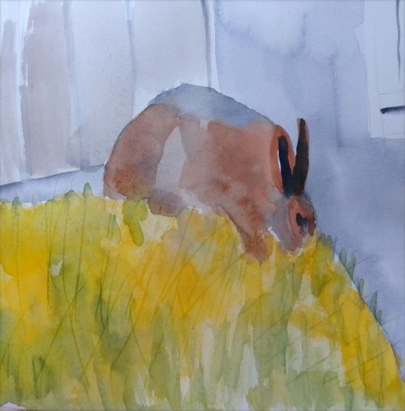 Hares not everwhere but here + there,  watercolour 8x8, July 5.09